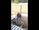 Алиса и собака