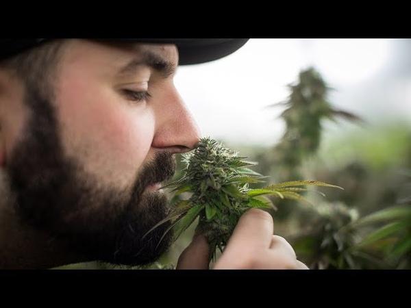 Чем может обернуться легализация марихуаны в Израиле Дискуссия на RTVI