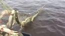 Необычные случаи на рыбалке! Ловля на сеть браконьерами! Видео Приколы 7