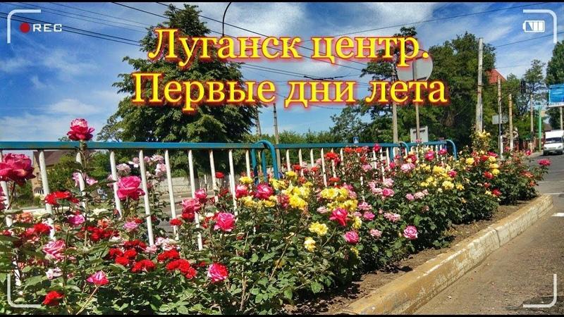 Луганск центр. Первые дни лета. Розы на Советской