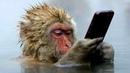 Обезьяны УМНЕЕ людей - невероятные способности обезьян. Умные обезьяны, документальный фильм - опыты