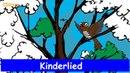 Kuckuck, kuckuck, rufts aus dem Wald - Kinderlied -Sing mit Yleekids