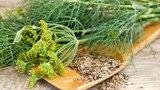 Как ЛЕЧИТЬСЯ семенами УКРОПА от кашля, бронхита, запоров, недержания...