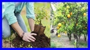 Como Plantar Un Arbol Frutal Correctamente - Consejos para Plantar Paso a Paso
