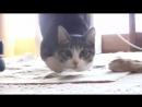 Лучший танец кота в новом смешном ролике видео про котов с песней