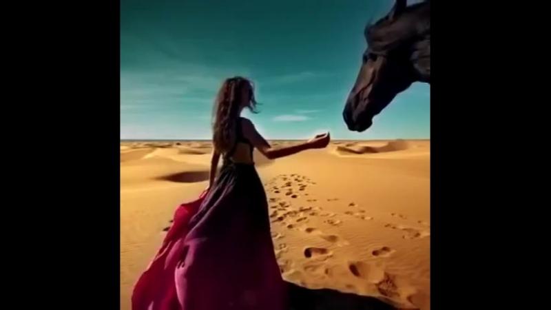 Salta...I love a horse