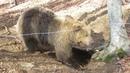 FOUR PAWS Bear Sanctuaries Advent Calendar/Day 20: Today we open the door to bear Jeta