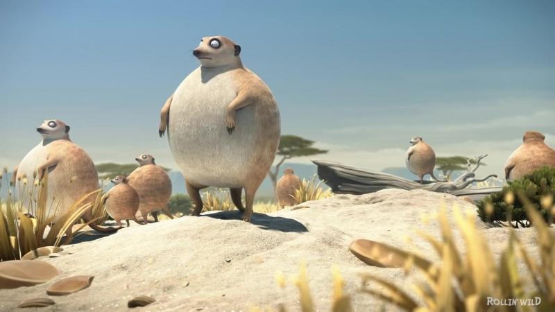 ROLLIN SAFARI - Meerkats - what if animals were round