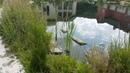 Плавательный пруд с осетром карпом амуром толстолобиком