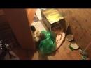мытищинские коти 5