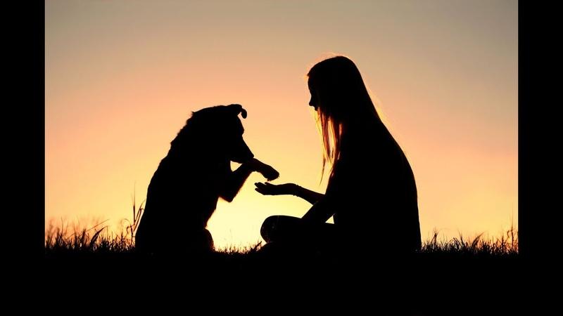 Добрые / Люди / спасают / животных / людей / хорошая / карма / animal Rescue / karma /топ/top/герои