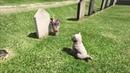 GTA 5 Cамая грустная пасхалка собачка пришла на могилу плакал целый день
