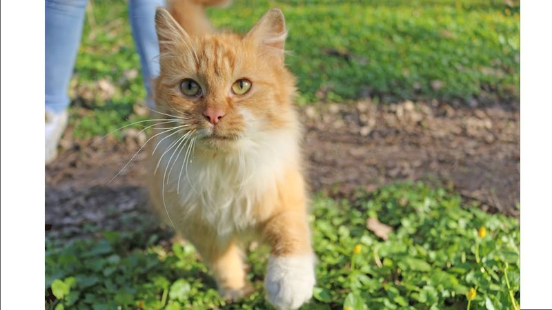 Лесной кот дает лапу. Памятник шпротам. Замок Бальга. Город Мамоново