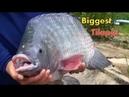 Fish Skills: Amazing Tilapia Fish Tank For Farming - Biggest Tilapia Aquarium