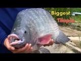 Fish Skills Amazing Tilapia Fish Tank For Farming - Biggest Tilapia Aquarium