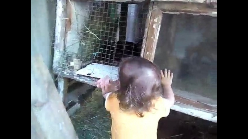 Анечка и кролики :