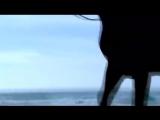 Al Bano &amp Ramina Pover. Liberta.