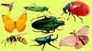 Животные для детей | Учим насекомых и их звуки | Учим названия и голоса насекомых для малышей