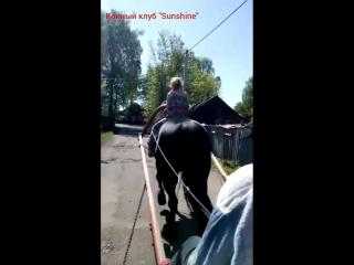 Дети и лошади чкк Sunshine