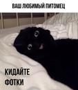 Самое время для ночного чатика: кидайте в комментарии фото любимых котеек, пёселей…