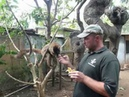 Бамбуковый лемур КРУГОСВЕТКА. Madagascar.Nosy-Be. LEMURIA LAND
