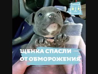 Полицейские спасли щенка от обморожения