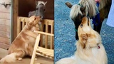 Dog Comforts Rescued Pony That Was Starved of Food and Affection