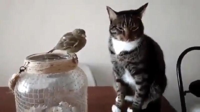 Сказали папугая не трогать