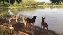 Dog Owner Plays Prank on Furry Friends || ViralHog