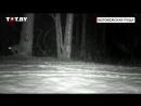 Чем занимаются животные в Беловежской пуще, пока никто не видит. Видео с фотоловушек.