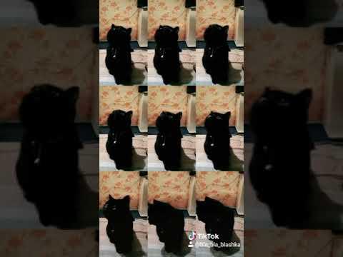 Люцифер снимается в тик токе,звезда,тикток,кот,топ,танцы,blackcat