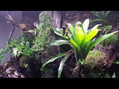 Custom Rainforest Vivarium Terrarium Paludarium