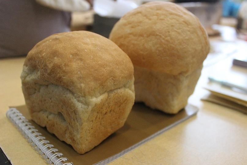 Хлеб выпеченный в лаборатории селекционной станции из сортов нашей пшеницы