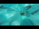 Длинные щупальца осьминога