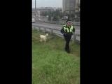 один козёл мешает другому взятки брать