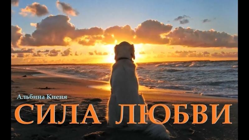 Киеня Альбина - Сила Любви