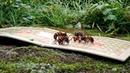 オオスズメ蜂捕獲!クロスズメ蜂駆除 2017年10月6日 富山県射水市