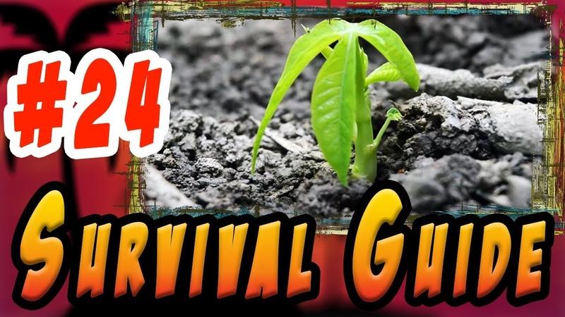 Как посадить и вырастить Маниок и клубни Ямса V 01 Ser 24