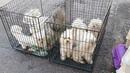 🔴9 собак засунули в клетки и бросили на улице…