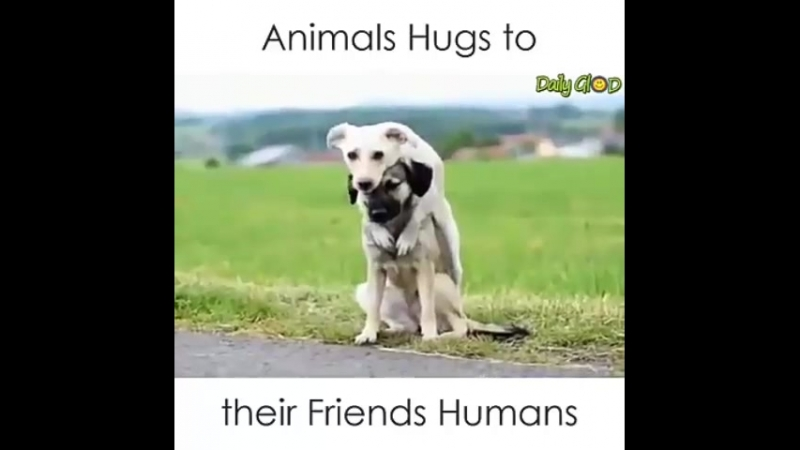 Животные они тоже любят ласку И теплоту