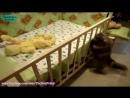 Лучшая подборка Кошки и Дети!Приколы с Детьми! - Funny Videos Cats and Kids!