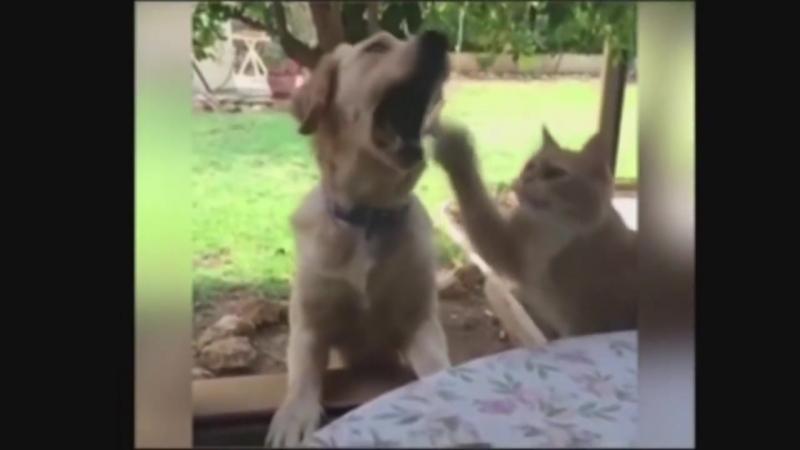 Кот красавец