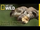 Nat Geo Wild Самые странные в мире питомцы 1080р