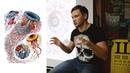 Доклад о медузах поколение убийц