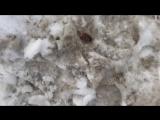 [Саша Белый] ВЛОГ: Готовимся к поеданию Мадагаскарских Тараканов