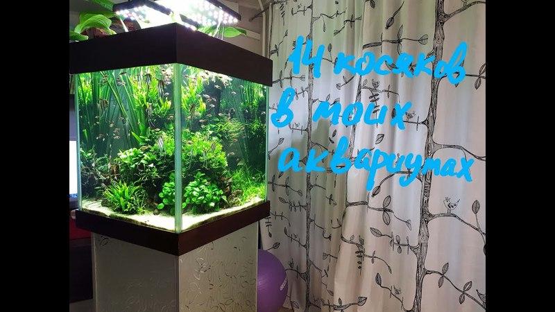 14 косяков в моих аквариумах