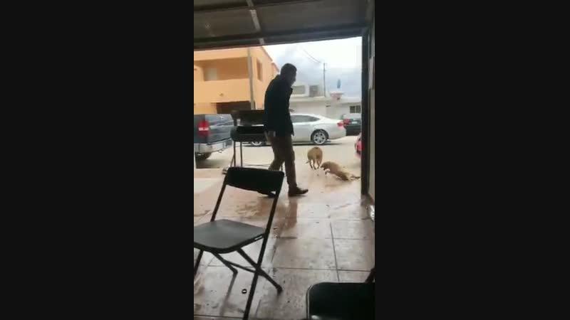 Gore com cachorro [21]