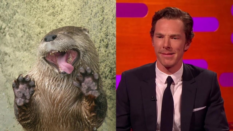 Benedict Cumberbatch's resemblance to an otter – The Graham Norton Show- Series 18 Episode 9 – BBC