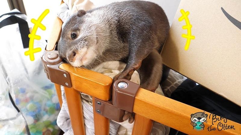 物置部屋に可愛いカワウソのビンゴを発見した(Lets find Otter Bingo together!)