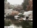 Снежное утро в Бруклинском ботанический саду